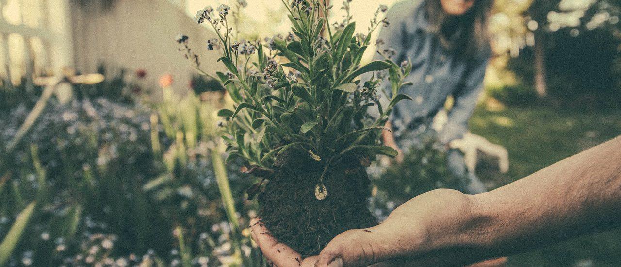 Une personne (main) tient un plant à mettre en terre, femme en arrière-plan.