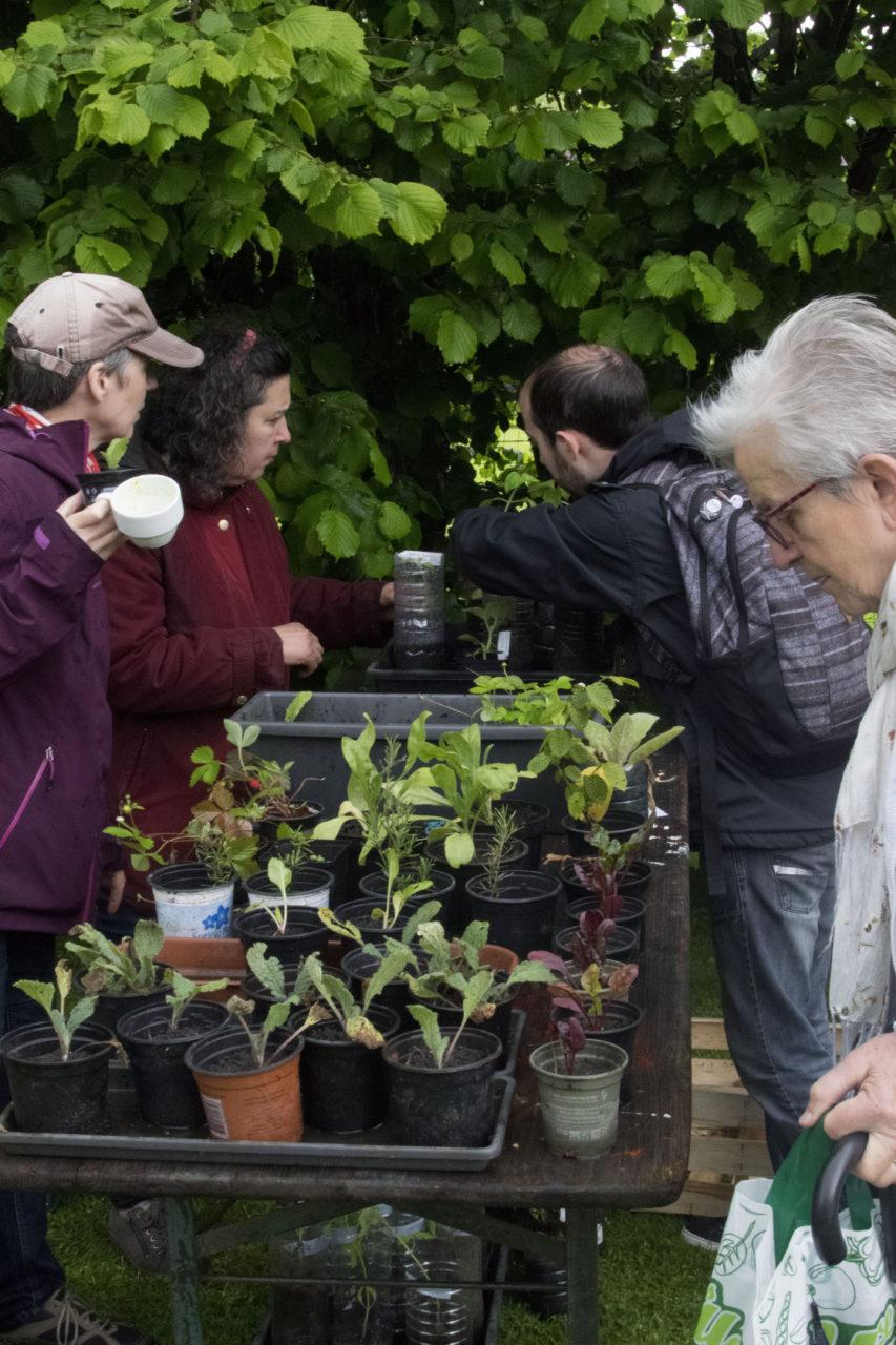 Bourse d'échange gratuite de plantes et graines Fête de la Transition
