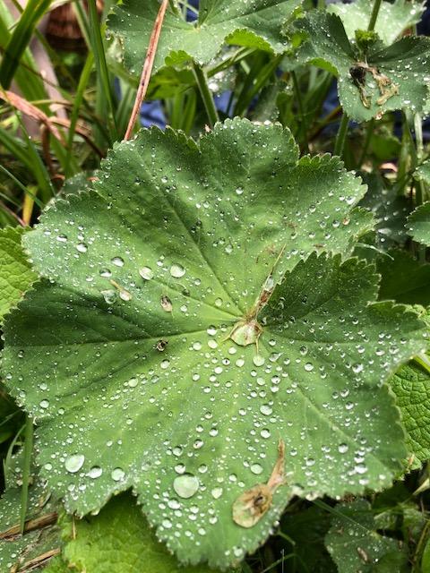 balade plantes sauvages Fête de la Transition