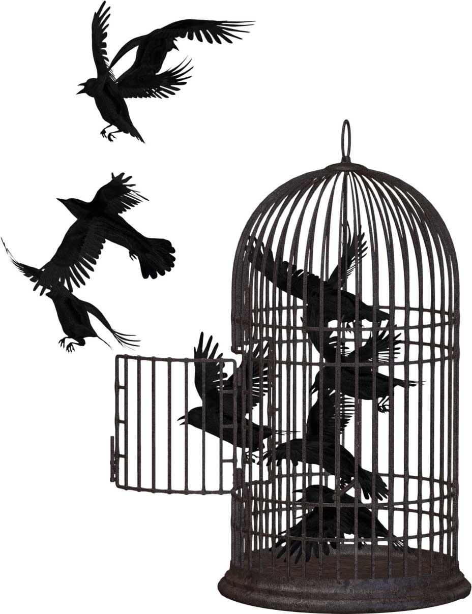 crow-2191180_1280